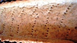 Tarta cebulowo serowa